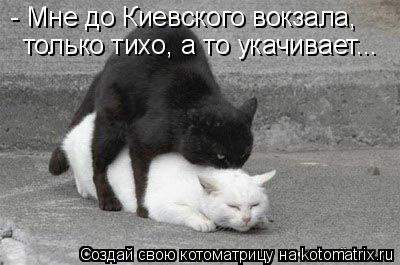 Котоматрица: - Мне до Киевского вокзала,  только тихо, а то укачивает...