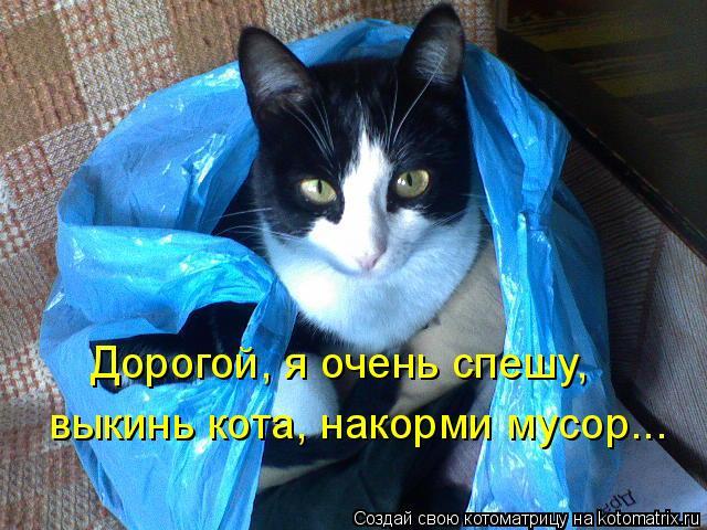 Котоматрица: Дорогой, я очень спешу,  выкинь кота, накорми мусор...
