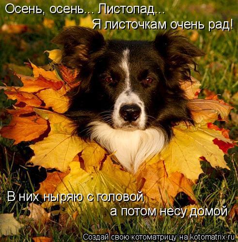 Котоматрица: Осень, осень... Листопад... Я листочкам очень рад! В них ныряю с головой а потом несу домой