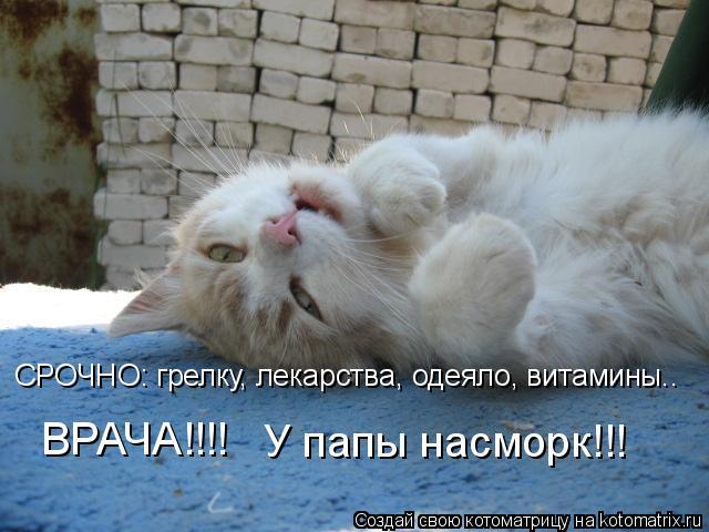 Котоматрица: СРОЧНО: грелку, лекарства, одеяло, витамины.. ВРАЧА!!!! У папы насморк!!!