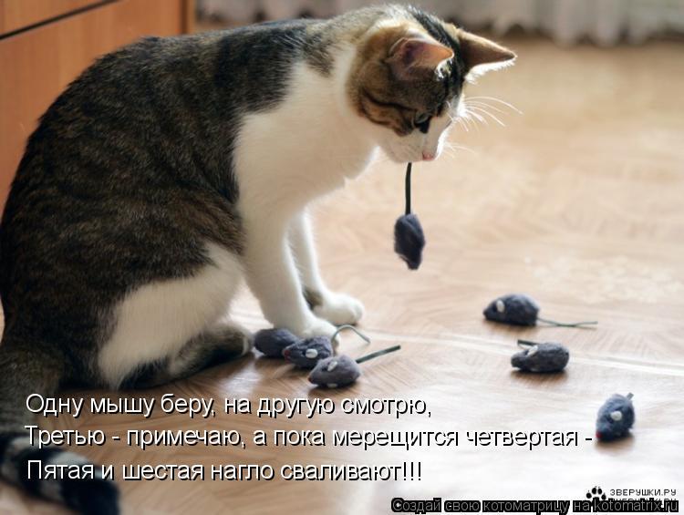 Котоматрица: Одну мышу беру, на другую смотрю,  Третью - примечаю, а пока мерещится четвертая -  Пятая и шестая нагло сваливают!!!
