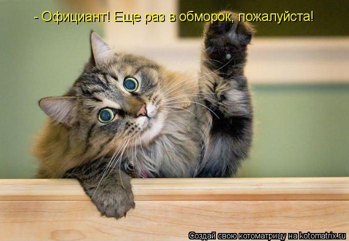 Котоматрица: - Официант! Еще раз в обморок, пожалуйста!