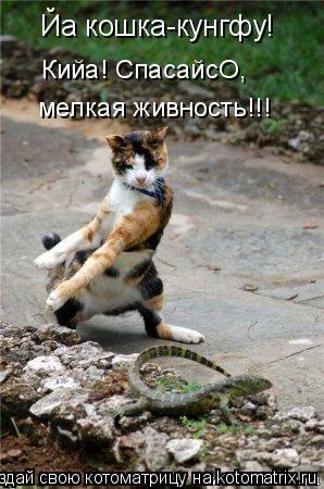 Котоматрица: Йа кошка-кунгфу!  Кийа! СпасайсО, мелкая живность!!!