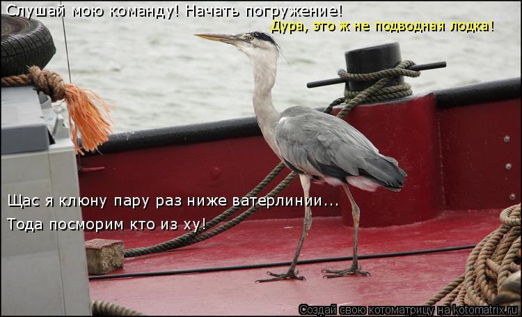 Котоматрица: Слушай мою команду! Начать погружение! Дура, это ж не подводная лодка! Щас я клюну пару раз ниже ватерлинии... Тода посморим кто из ху!