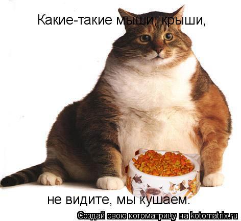 Котоматрица: Какие-такие мыши, крыши, не видите, мы кушаем.