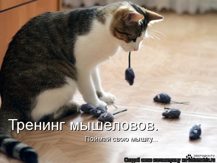 Котоматрица: Тренинг мышеловов. Поймай свою мышку...