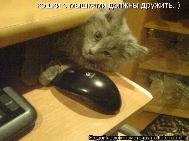 Котоматрица: кошки с мышками должны дружить..)