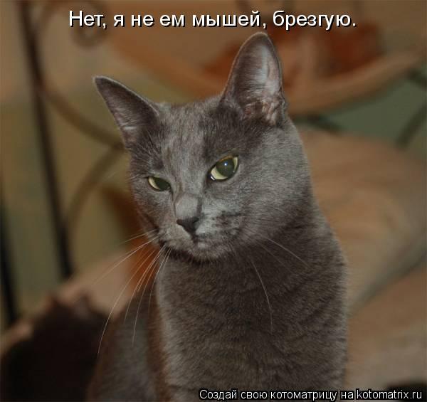 Котоматрица: Нет, я не ем мышей, брезгую.