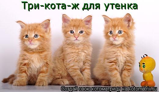 Котоматрица: Три-кота-ж для утенка