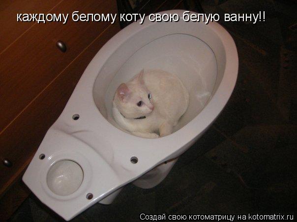 Котоматрица: каждому белому коту свою белую ванну!!
