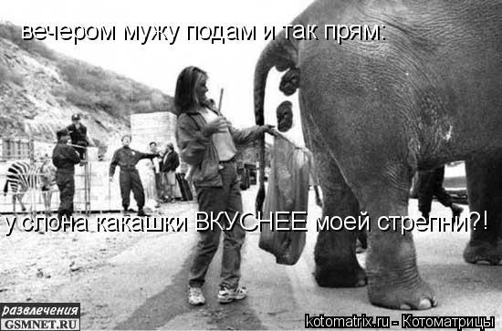 Котоматрица: вечером мужу подам и так прям: вечером мужу подам и так прям: у слона какашки ВКУСНЕЕ моей стрепни? !
