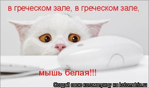 Котоматрица: в греческом зале, в греческом зале, мышь белая!!!