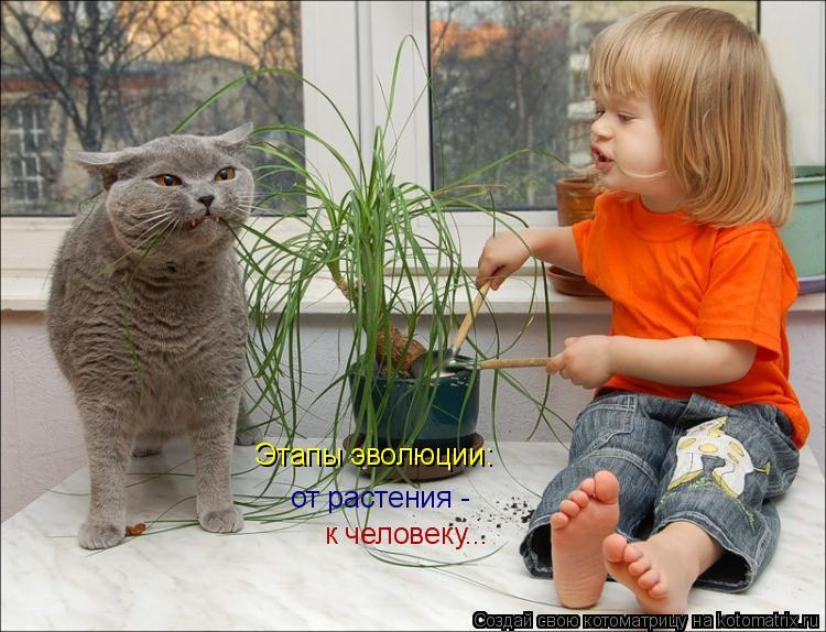 Котоматрица: Этапы эволюции: от растения -  к человеку...