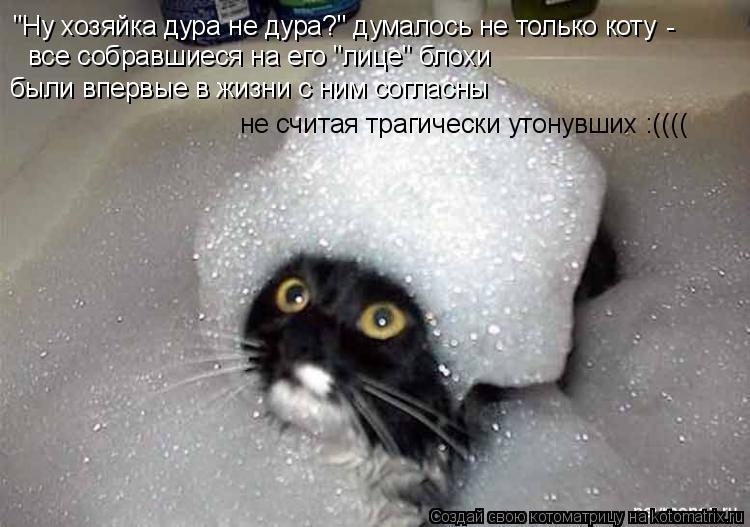 """Котоматрица: """"Ну хозяйка дура не дура?"""" думалось не только коту - все собравшиеся на его """"лице"""" блохи  были впервые в жизни с ним согласны не считая трагиче"""