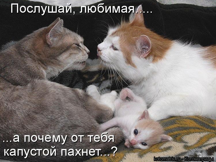 Котоматрица: Послушай, любимая..... ...а почему от тебя капустой пахнет...?