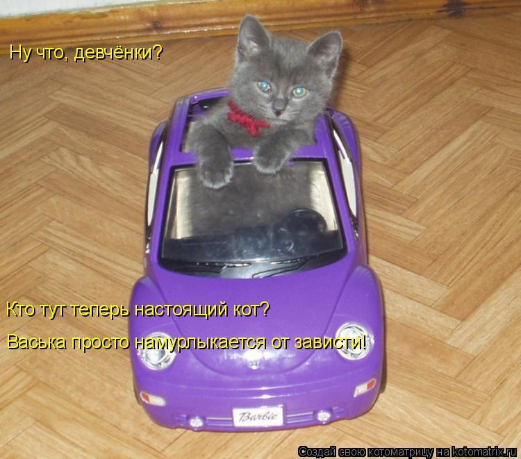 Котоматрица: Ну что, девчёнки? Кто тут теперь настоящий кот? Васька просто намурлыкается от зависти!
