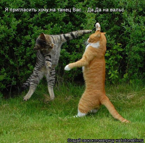 Котоматрица: Я пригласить хочу на танец Вас... Да,Да на вальс