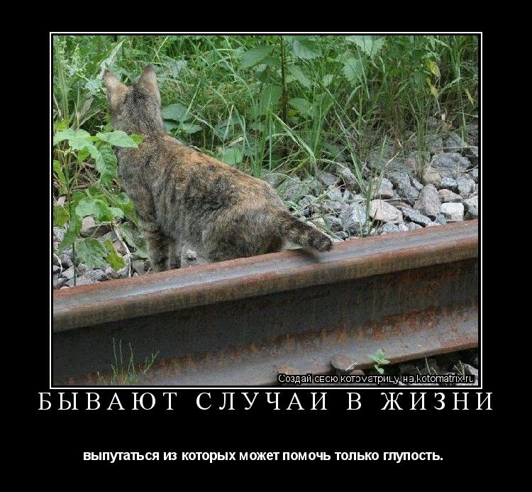 Котоматрица: Бывают случаи в жизни выпутаться из которых может помочь только глупость.