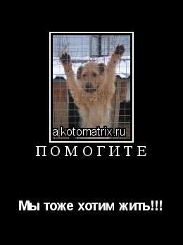 Котоматрица: Помогите Мы тоже хотим жить!!!