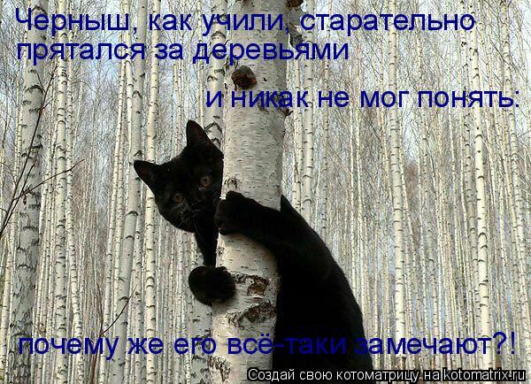 Котоматрица: почему же его всё-таки замечают?! Черныш, как учили, старательно прятался за деревьями и никак не мог понять: