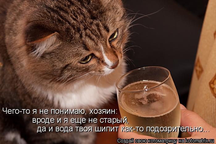 Котоматрица: Чего-то я не понимаю, хозяин: вроде и я еще не старый, да и вода твоя шипит как-то подозрительно...