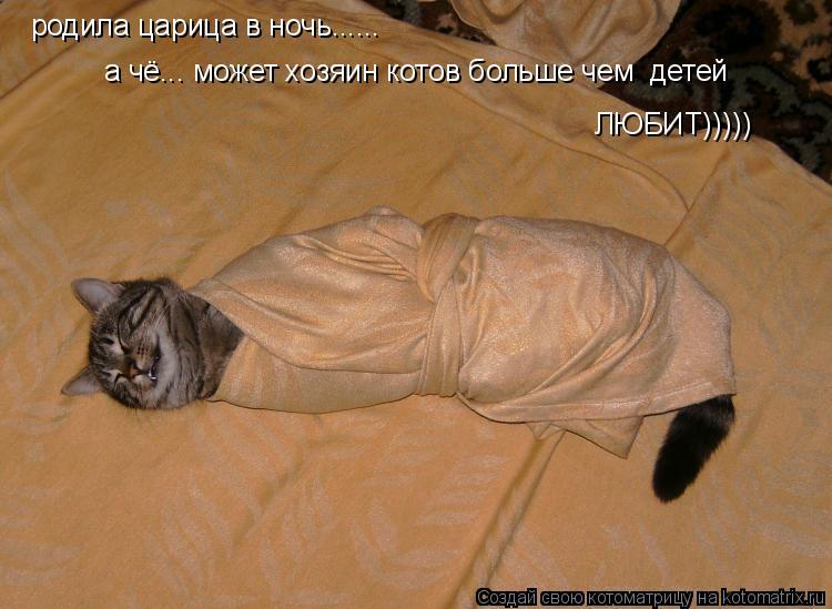 Котоматрица: родила царица в ночь...... а чё... может хозяин котов больше чем  детей  ЛЮБИТ)))))