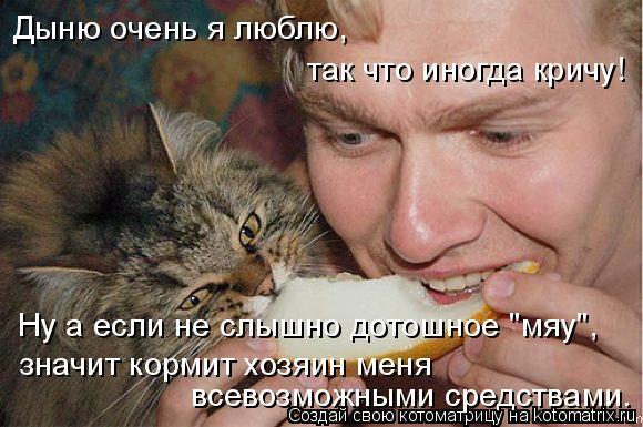 """Котоматрица: Дыню очень я люблю, так что иногда кричу! Ну а если не слышно дотошное """"мяу"""", значит кормит хозяин меня всевозможными средствами."""