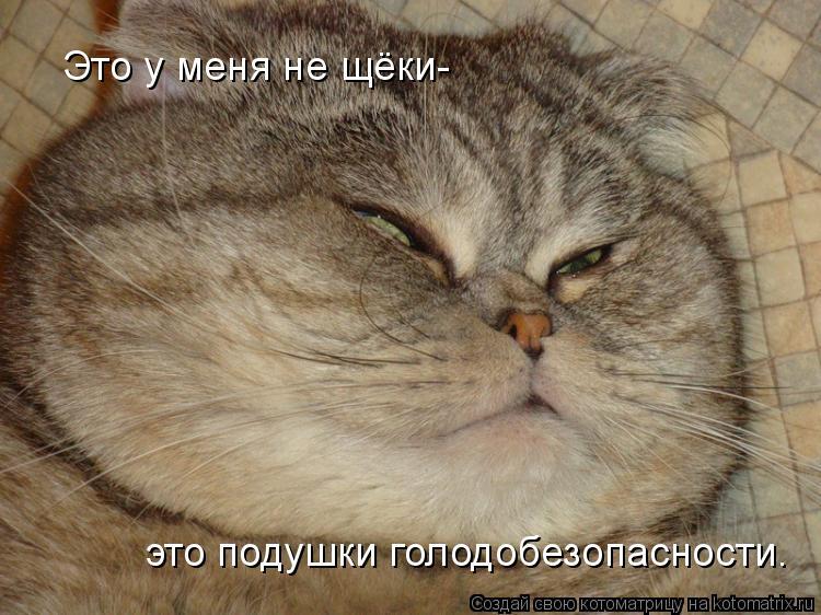 Котоматрица: Это у меня не щёки- это подушки голодобезопасности.