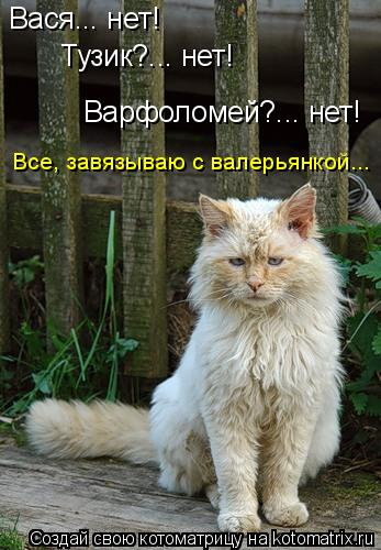 Котоматрица: Вася... нет! Тузик?... нет! Варфоломей?... нет! Все, завязываю с валерьянкой...