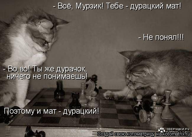 Котоматрица: - Всё, Мурзик! Тебе - дурацкий мат! - Не понял!!! - Во,во! Ты же дурачок, ничего не понимаешь! Поэтому и мат - дурацкий!
