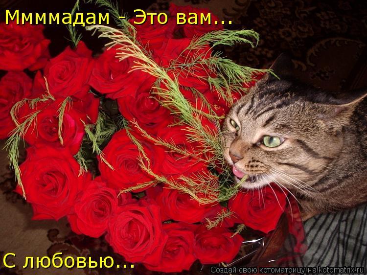Котоматрица: Ммммадам - Это вам... С любовью...