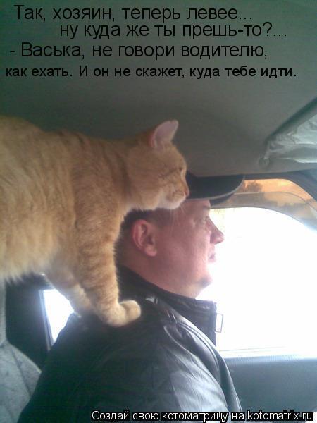 Котоматрица: Так, хозяин, теперь левее... ну куда же ты прешь-то?... - Васька, не говори водителю, как ехать. И он не скажет, куда тебе идти.