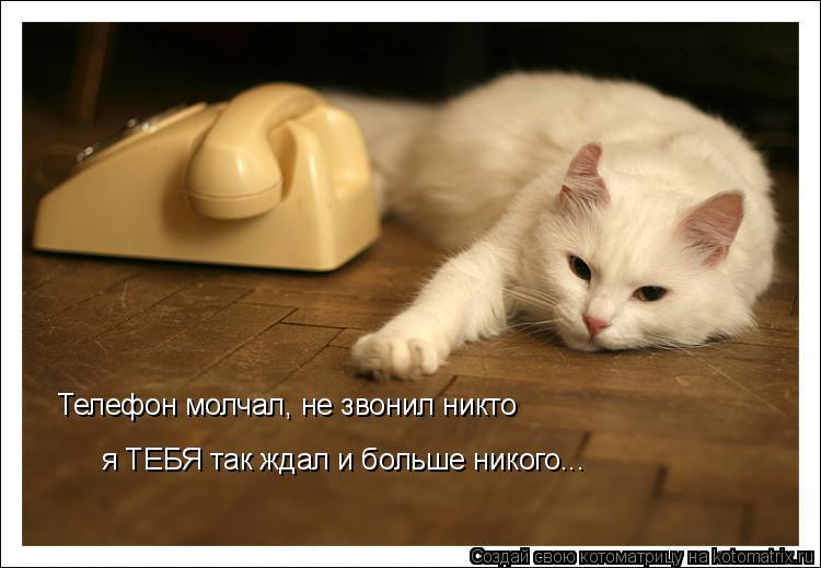 Котоматрица: Телефон молчал, не звонил никто я ТЕБЯ так ждал и больше никого...