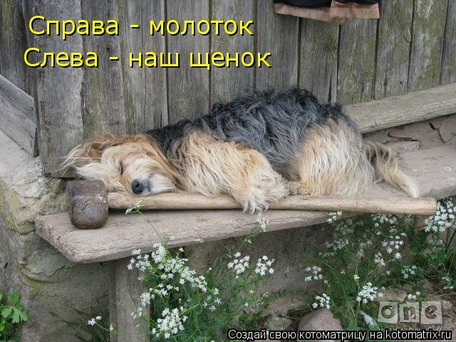 Котоматрица: Справа - молоток Слева - наш щенок
