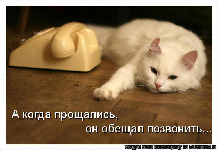 Котоматрица: А когда прощались,  он обещал позвонить...