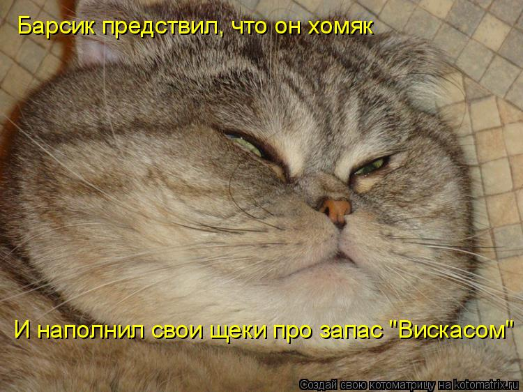 "Котоматрица: Барсик предствил, что он хомяк И наполнил свои щеки про запас ""Вискасом"""