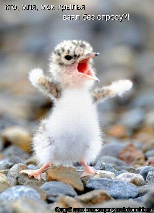 Котоматрица: кто, мля, мои крылья взял без спросу?!