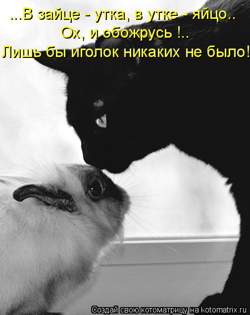 Котоматрица: ...В зайце - утка, в утке - яйцо.. Ох, и обожрусь !.. Лишь бы иголок никаких не было!
