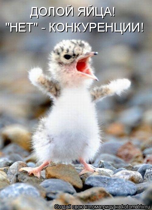"""Котоматрица: ДОЛОЙ ЯЙЦА! """"НЕТ"""" - КОНКУРЕНЦИИ!"""