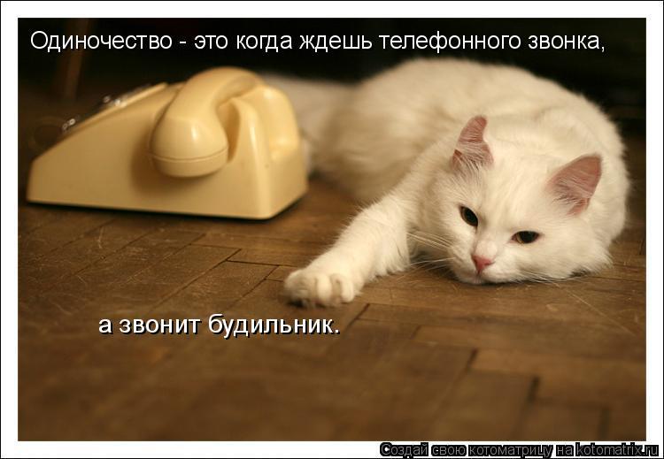 Котоматрица: Одиночество - это когда ждешь телефонного звонка,  а звонит будильник.