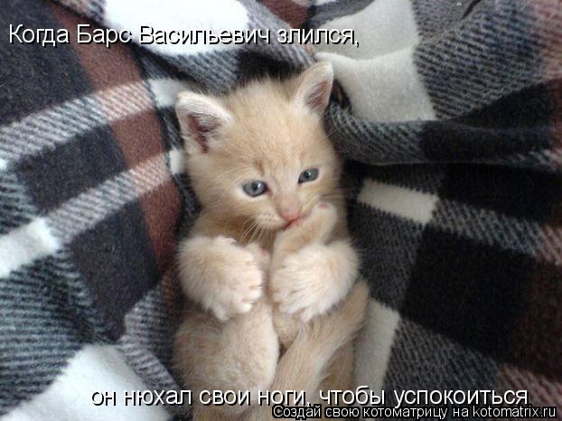 Котоматрица: Когда Барс Васильевич злился , он нюхал свои ноги, чтобы успокоиться