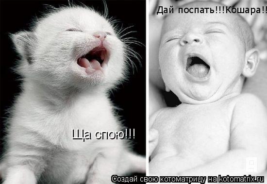 Котоматрица: Ща спою!!! Дай поспать!!!Кошара!!!