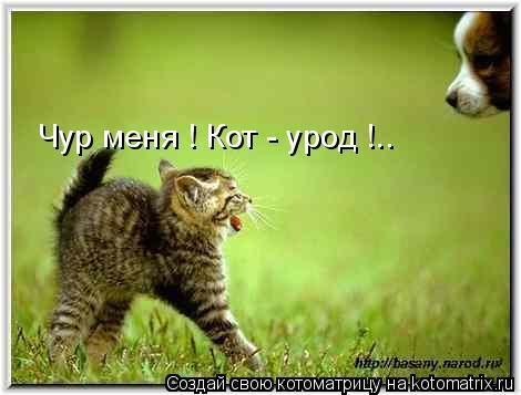 Котоматрица: Чур меня ! Кот - урод !..