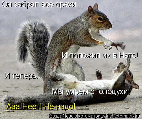 Котоматрица: Он забрал все орехи... И положил их в Натс! И теперь... Мы умрем с голодухи! Ааа!Неет! Не надо!