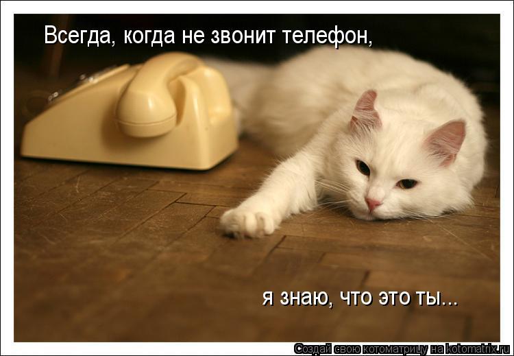 Котоматрица: Всегда, когда не звонит телефон,  я знаю, что это ты...