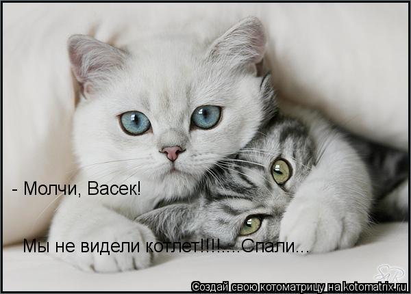 Котоматрица: - Молчи, Васек! Мы не видели котлет!!!!....Спали...
