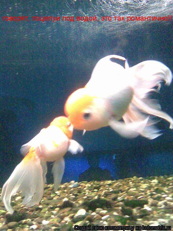 Котоматрица: говорят, поцелуи под водой, это так романтично!!!