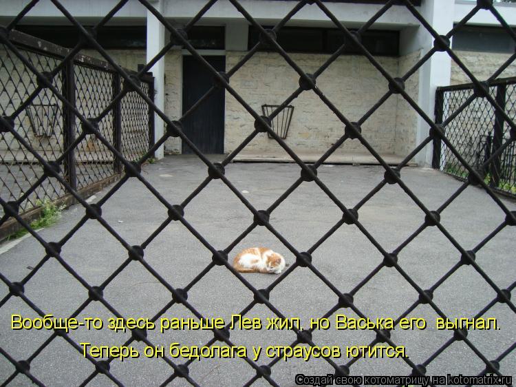 Котоматрица: Вообще-то здесь раньше Лев жил, но Васька его  выгнал.  Теперь он бедолага у страусов ютится.
