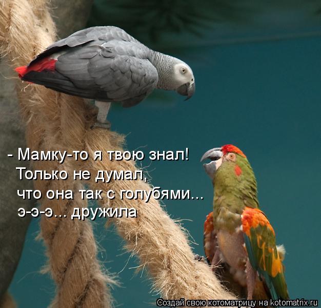 Котоматрица: - Мамку-то я твою знал! Только не думал,  что она так с голубями... э-э-э... дружила