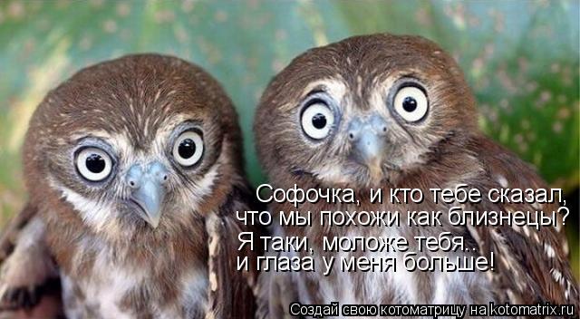 Котоматрица: Софочка, и кто тебе сказал, что мы похожи как близнецы? Я таки, моложе тебя.. и глаза у меня больше!